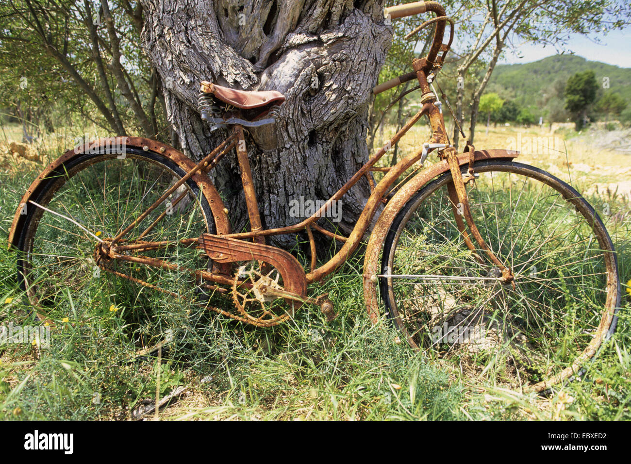 forgotten rusty bycicle on a meadow, Spain, Balearen, Ibiza - Stock Image