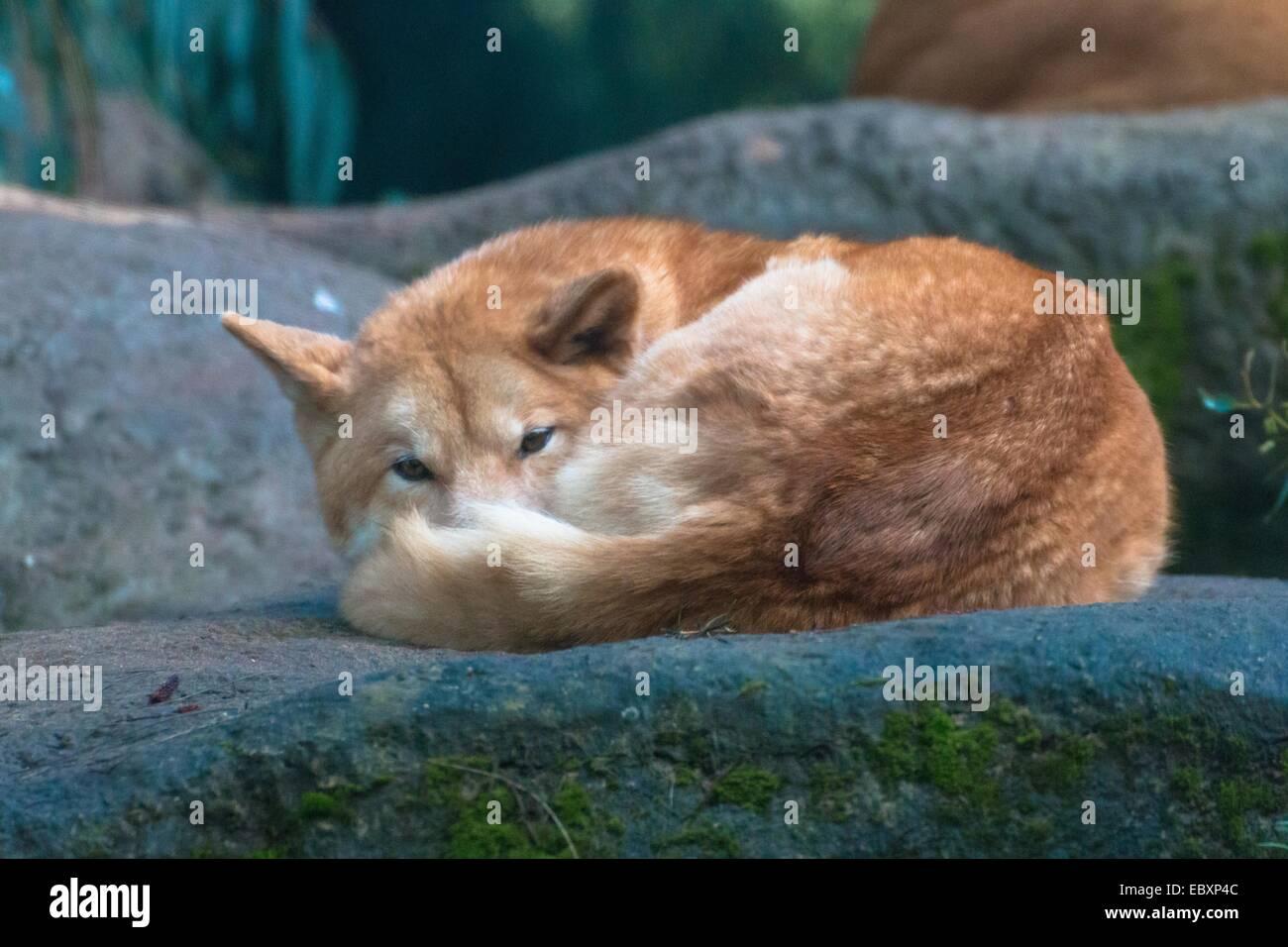 60 Jahre alte Cougars
