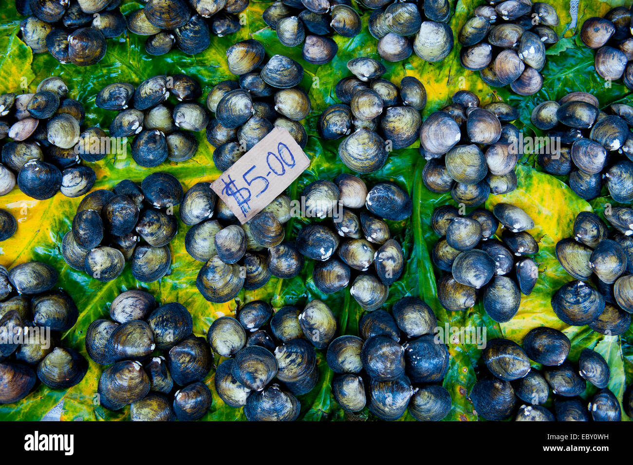 Mussels for sale at the market hall, Honiara, Solomon Islands - Stock Image