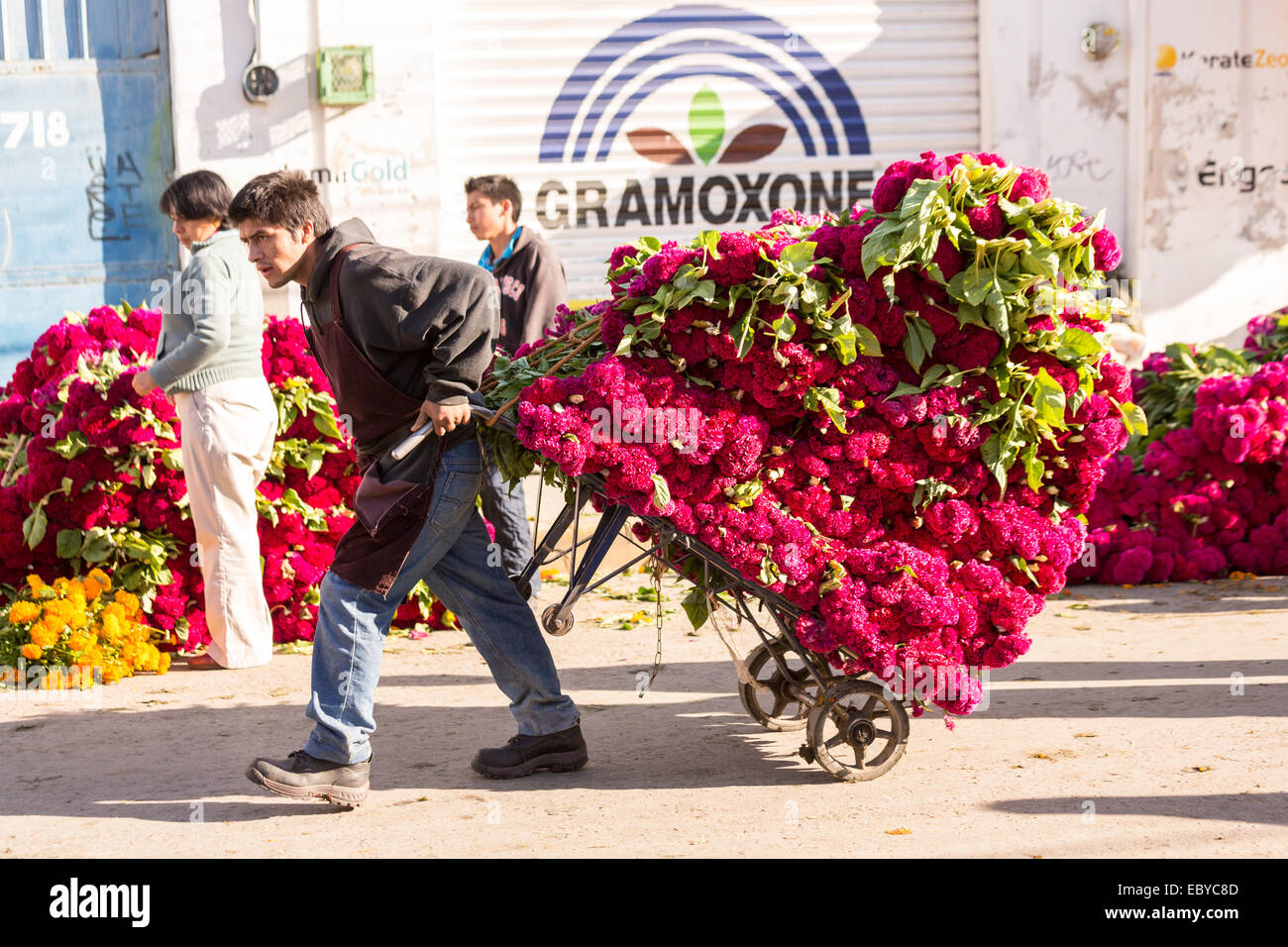 Vendors cart massive piles of flowers use to decorate tombs for the ...