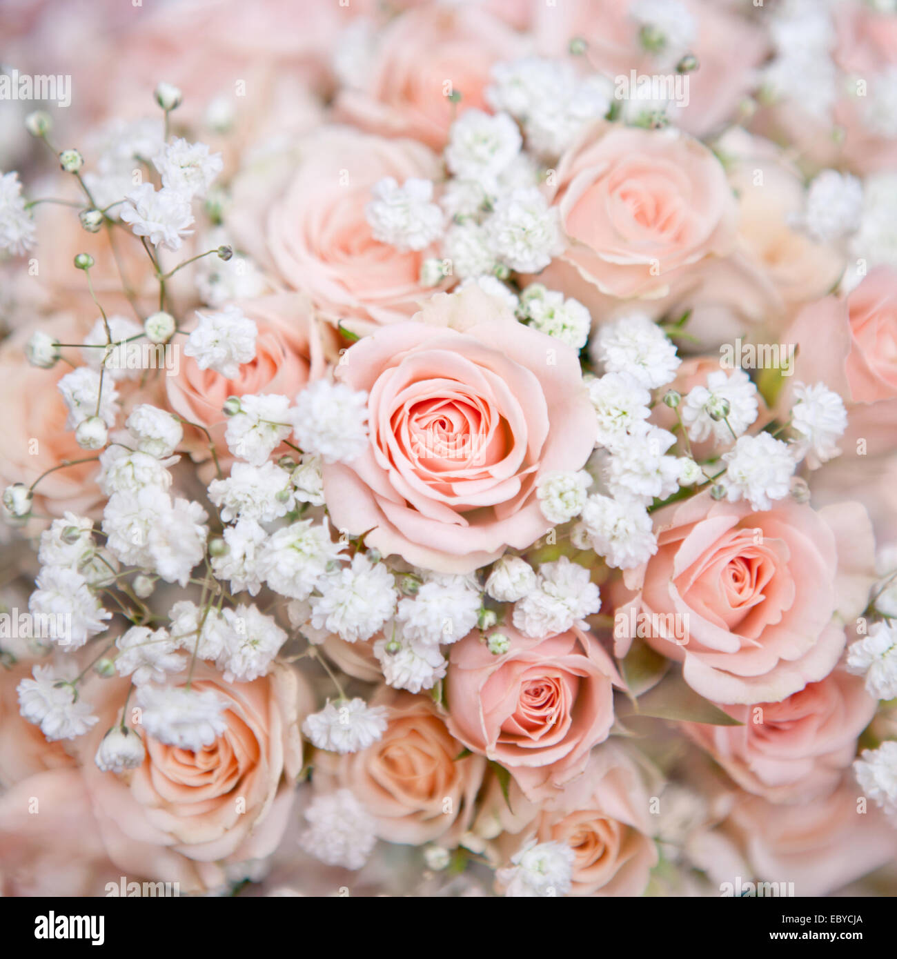 soft pink wedding bouquet with rose bush and little white flower ...