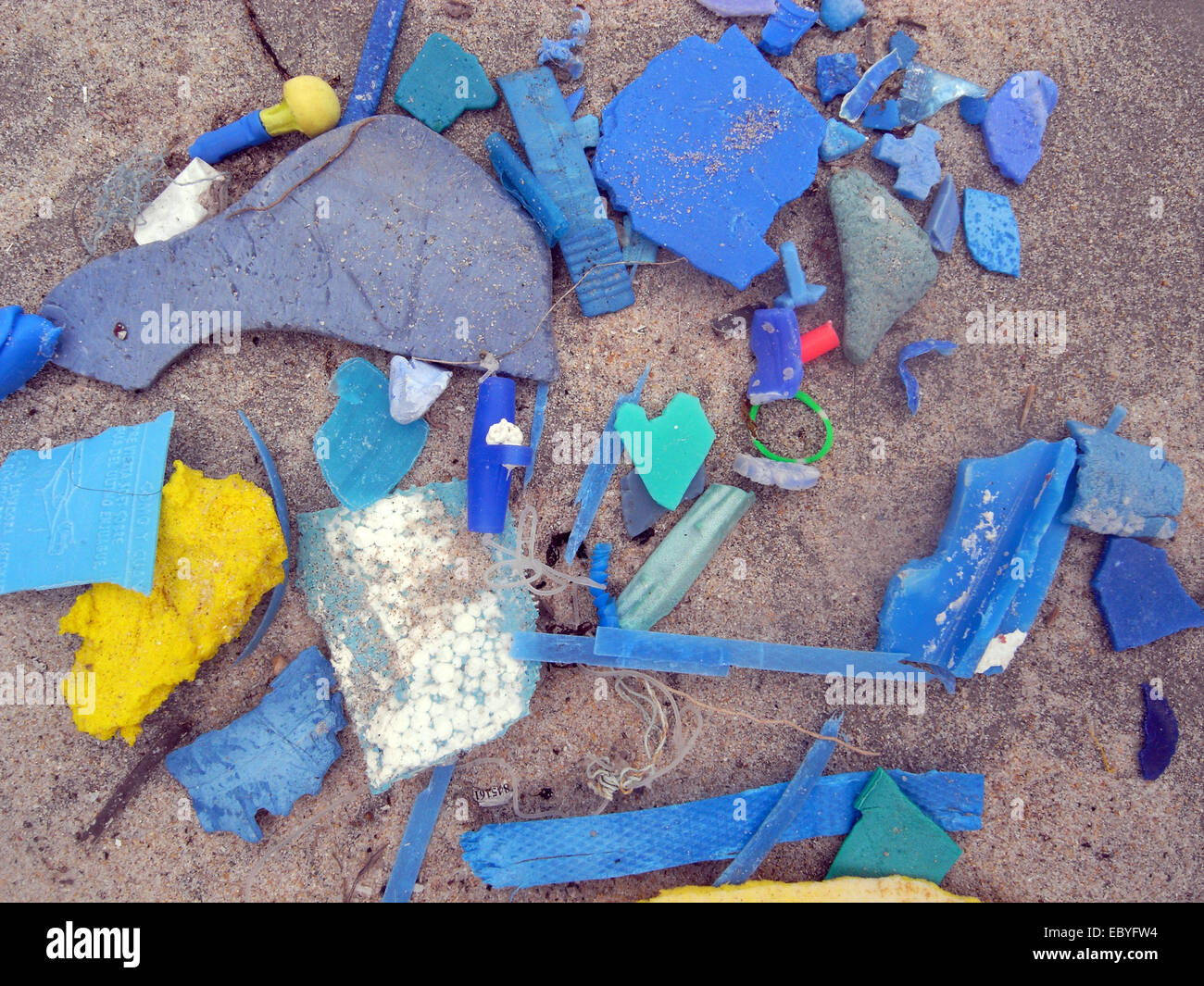 Microplastic fragments collected by volunteers during a beach cleanup, North Cottesloe Beach, Perth, Western Australia - Stock Image