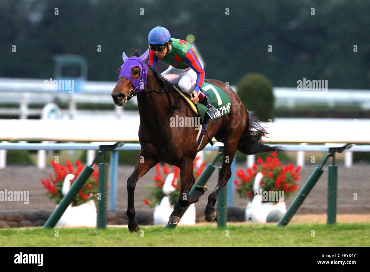Kyoto, Japan. 30th Nov, 2014. Am Ball Bleiben (Ken Tanaka) Horse Racing : Am Ball Bleiben ridden by Ken Tanaka wins - Stock Image