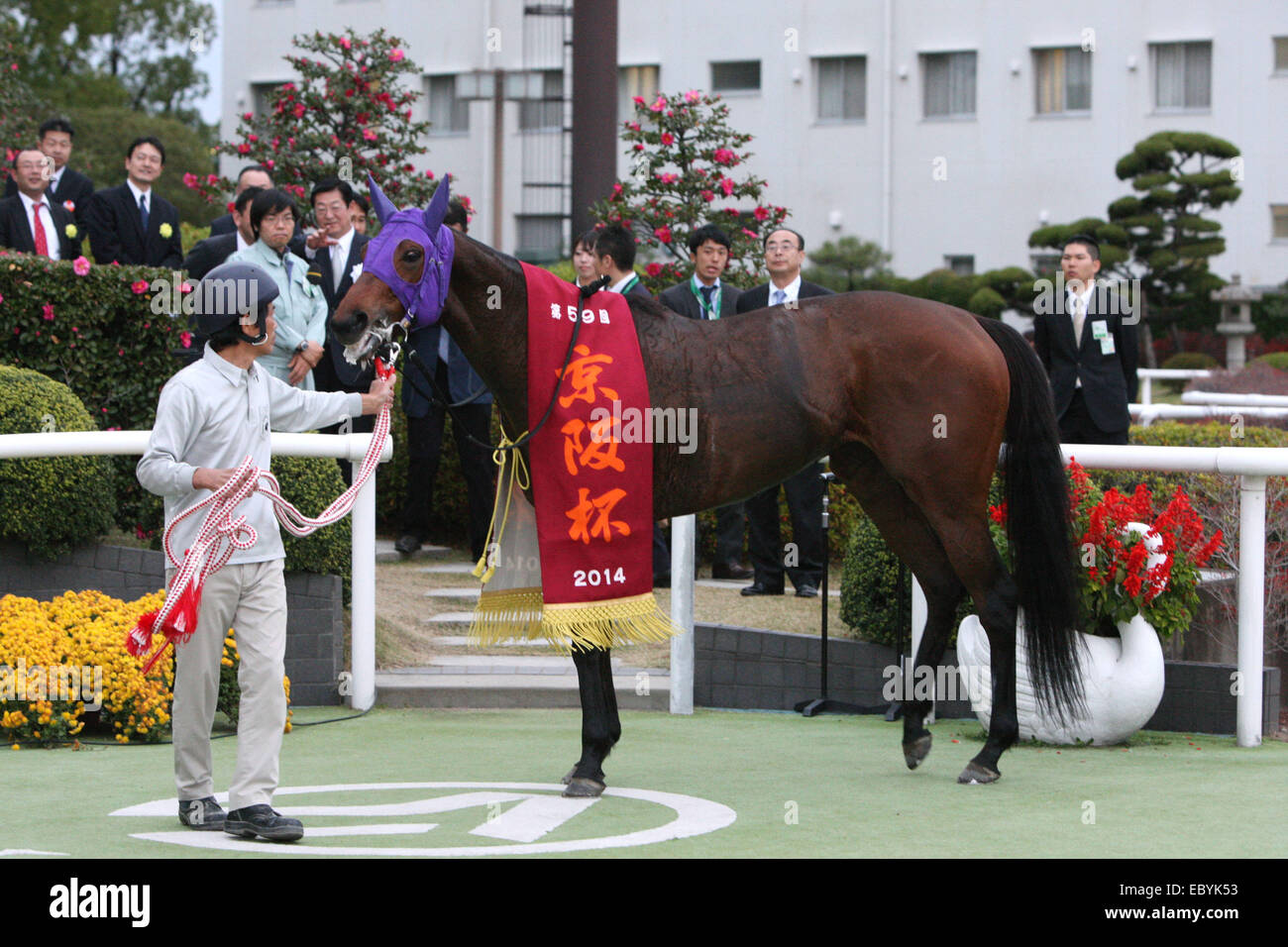 Kyoto, Japan. 30th Nov, 2014. Am Ball Bleiben Horse Racing : Am Ball Bleiben is led through the paddock after winning Stock Photo