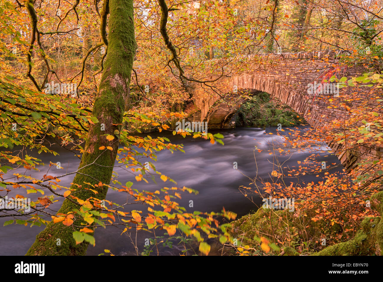 Colourful autumnal foliage on the banks of the River Brathay near Clappersgate Bridge, Lake District, Cumbria, England. - Stock Image