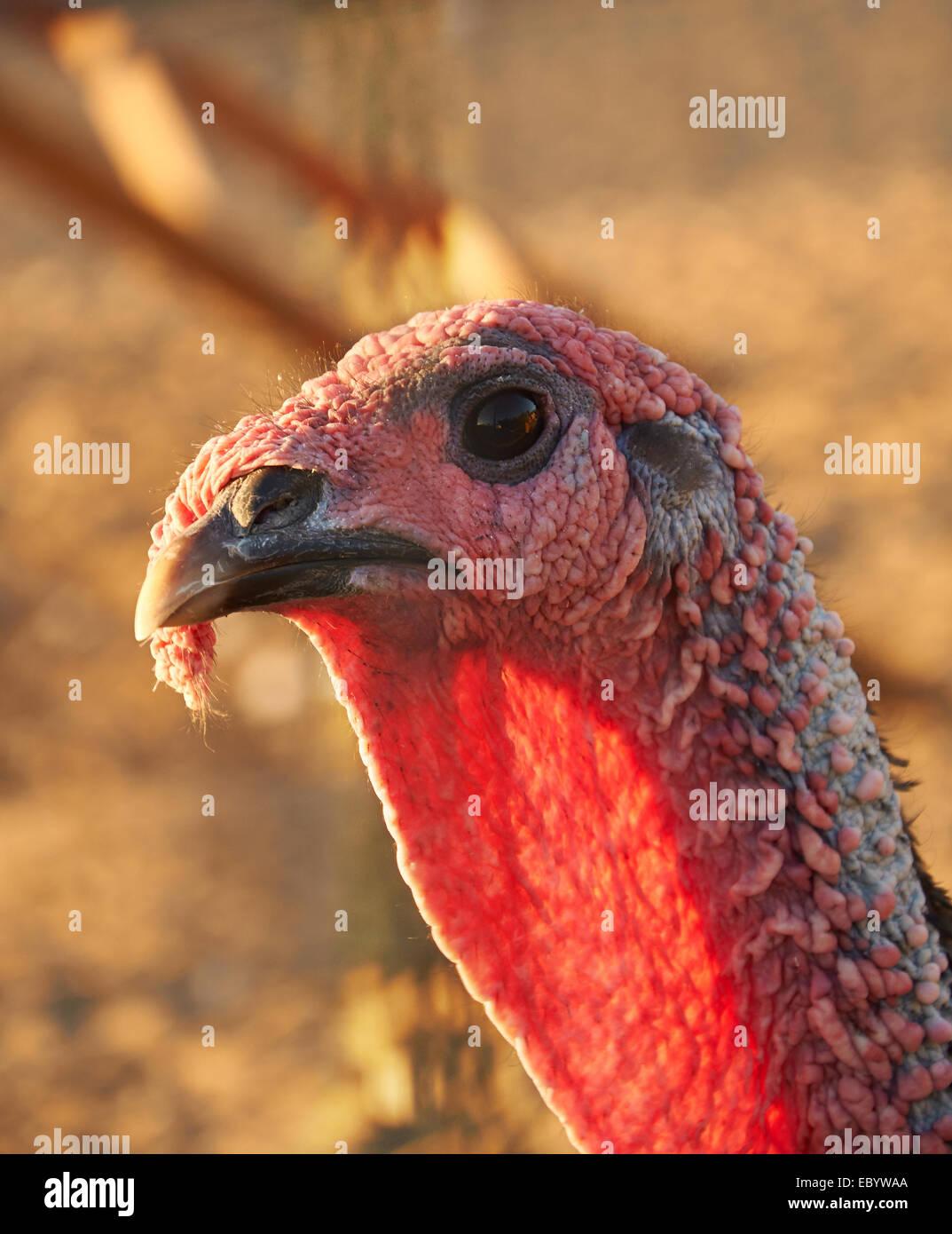 Cock head close ups
