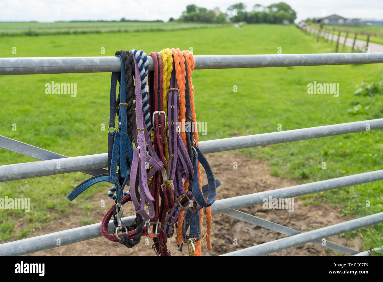 Colourful horse reins and harnesses hanging on a farm gate. - Stock Image