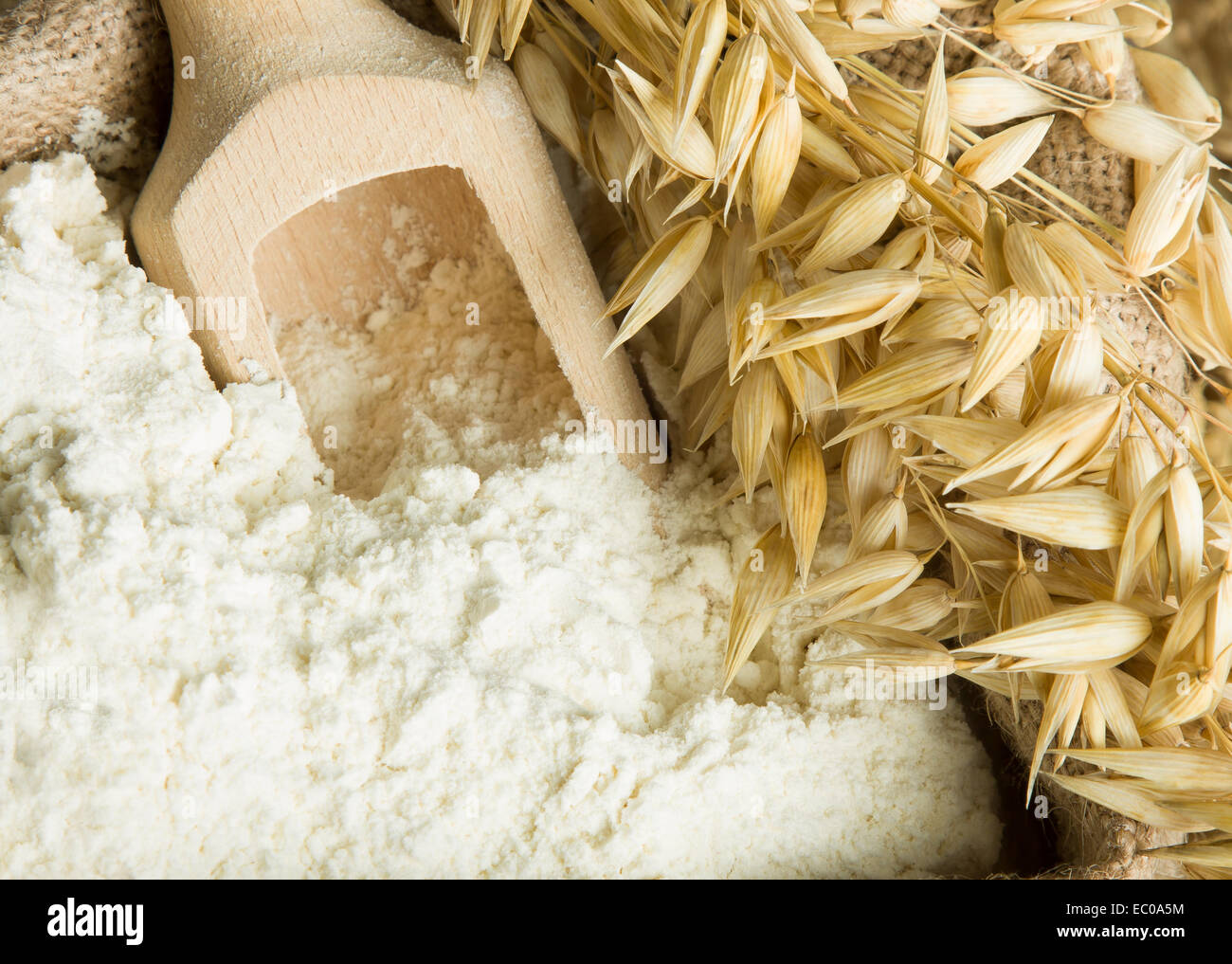 Flour in burlap bag and oat ears - Stock Image
