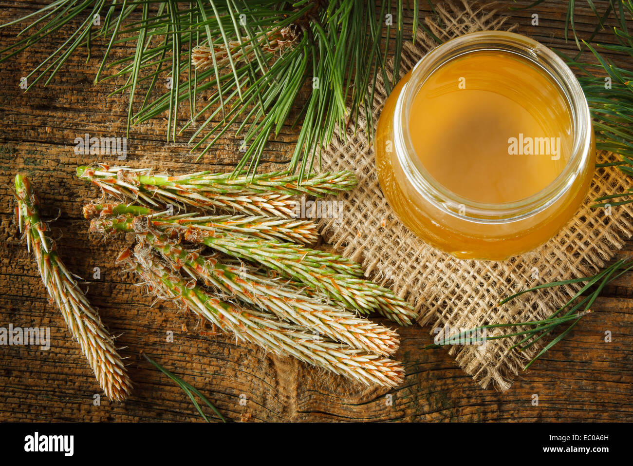 Homemade syrup made from green young pine buds and sugar - Stock Image