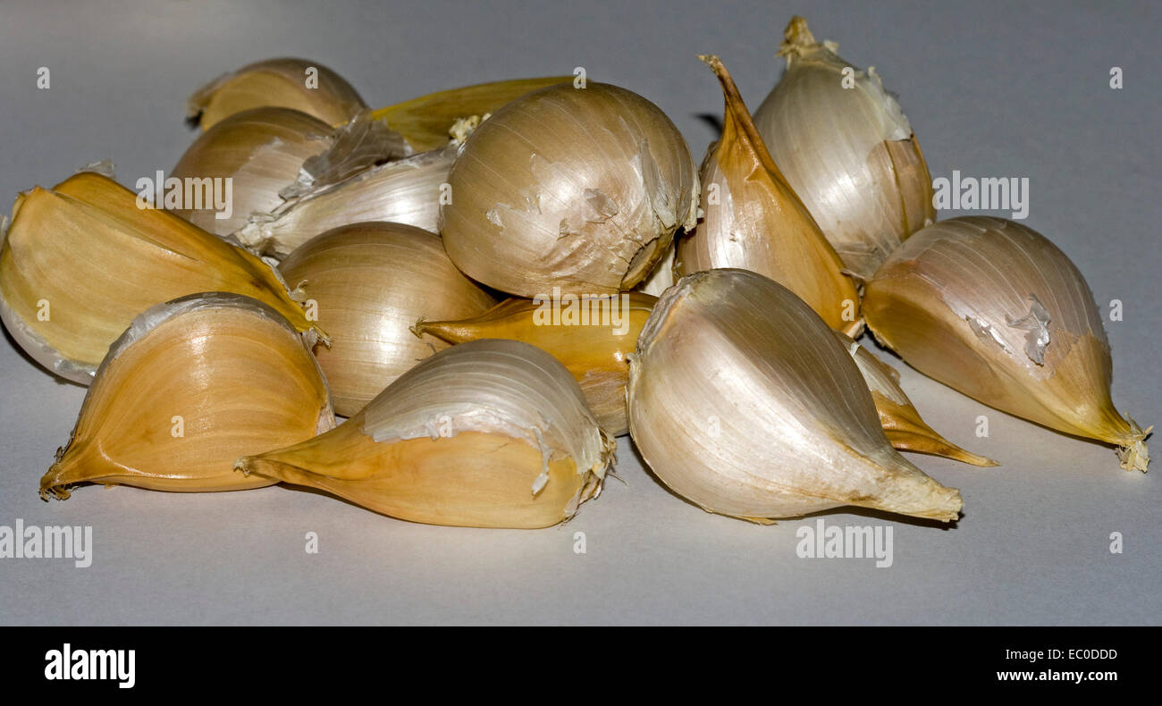 Cluster of freshly harvested golden brown cloves of giant Russian / elephant garlic, on pale background - Stock Image