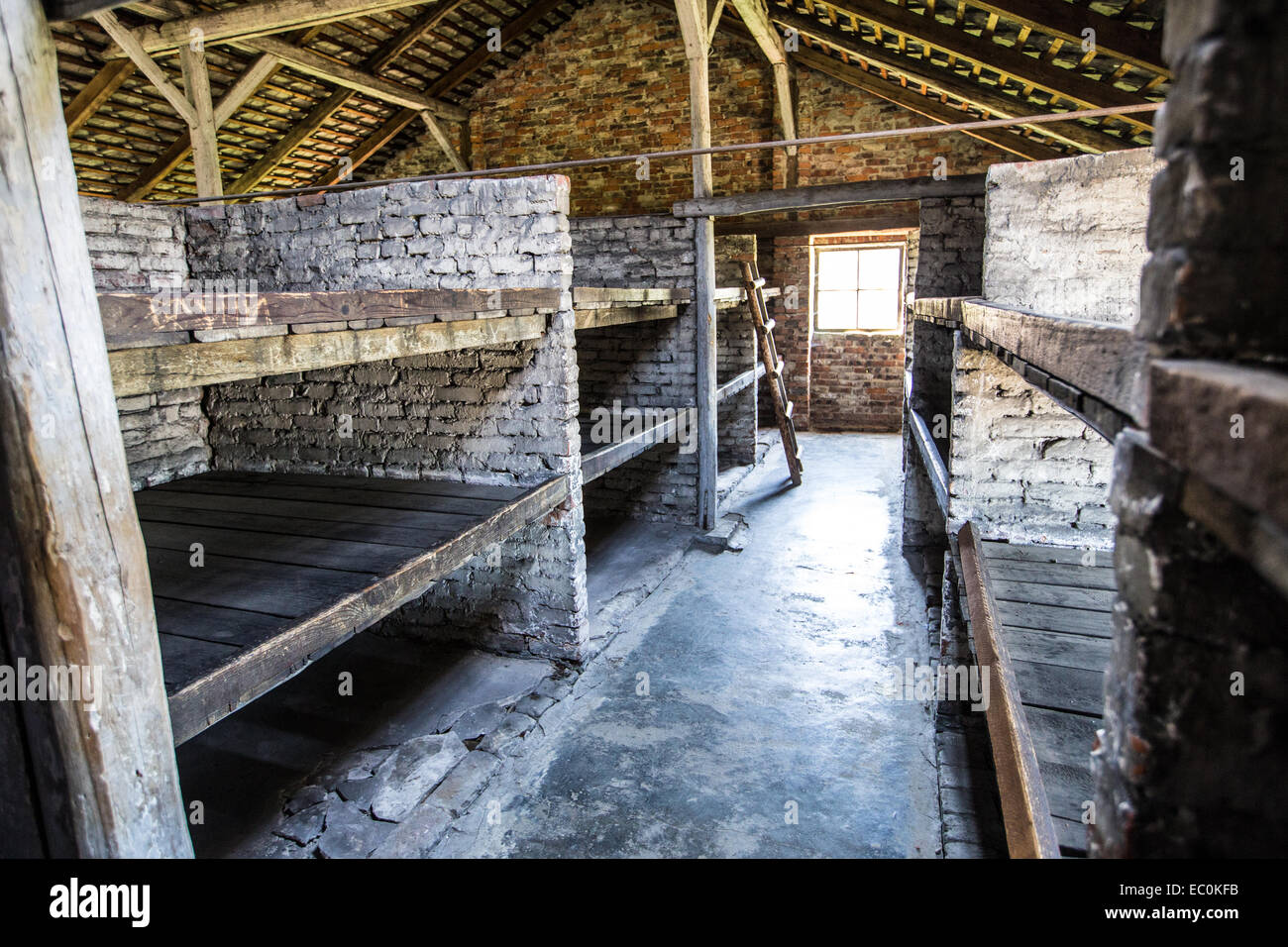 Prisoner bunks in Auschwitz Birkenau Concentration Camp, Poland - Stock Image