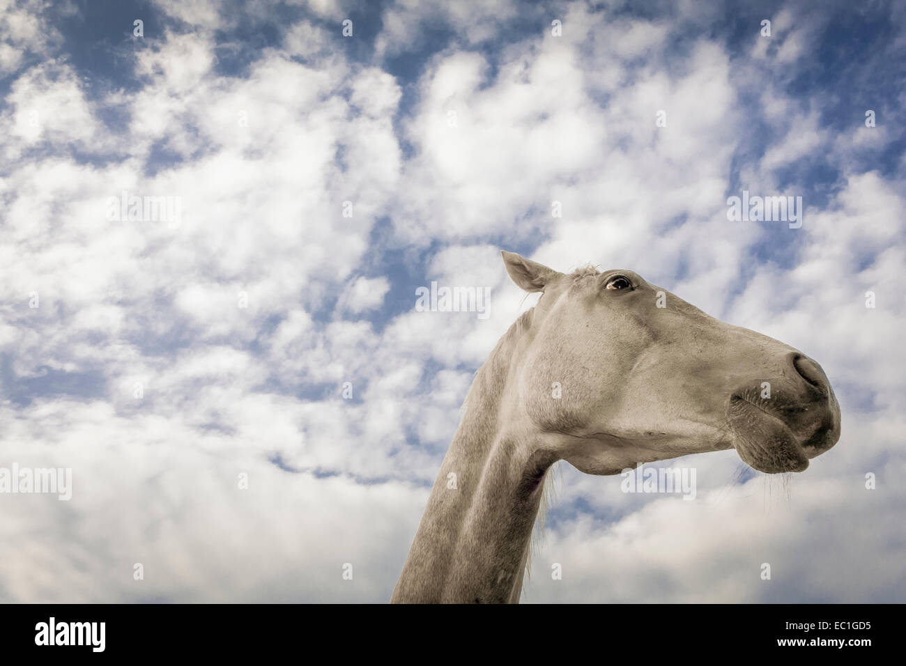 Extreme low angle view of horse's head against summer sky Stock Photo