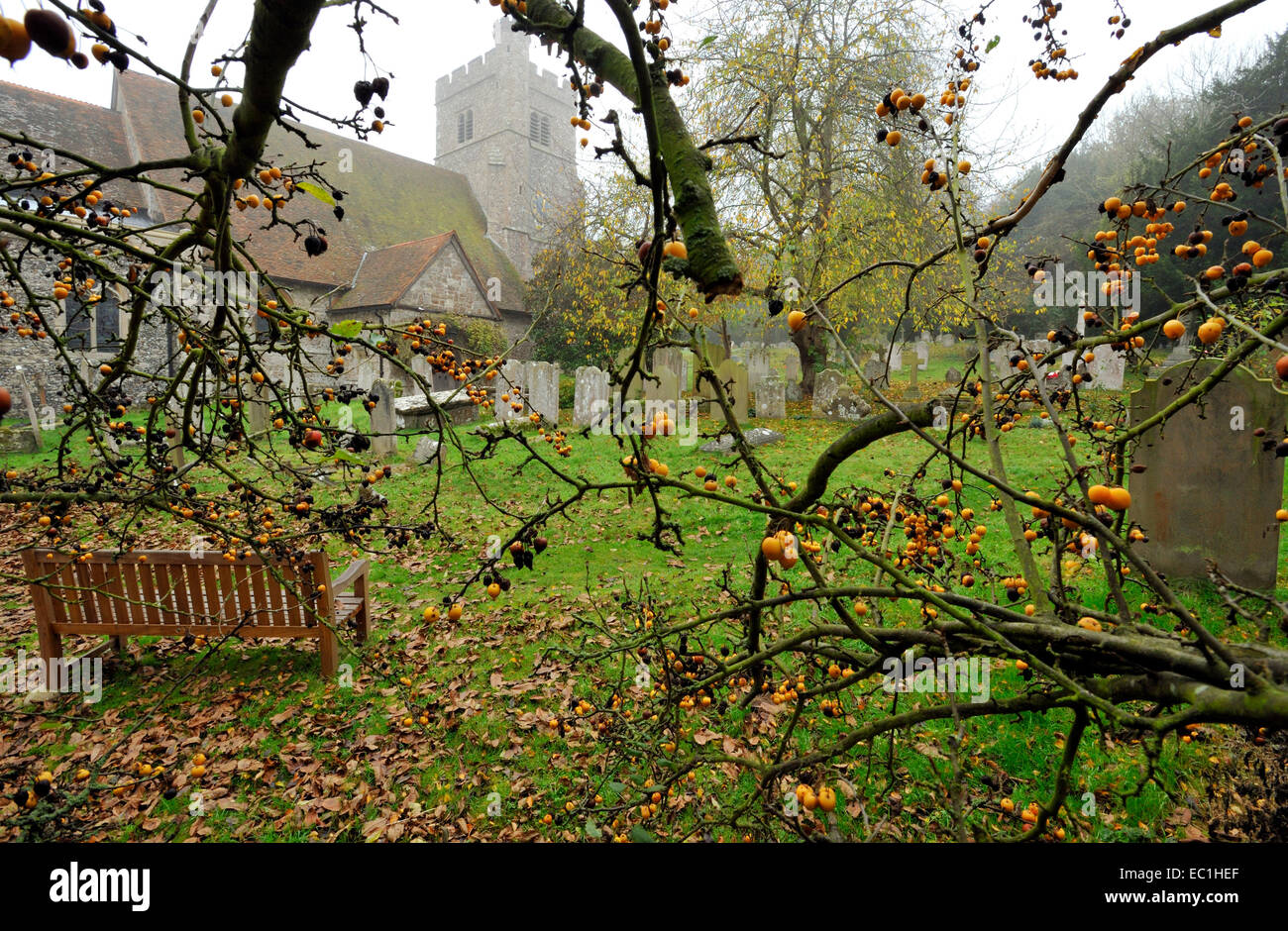 Dickens - graveyard at Shorne Parish church, near to his Gad's Hill home, and in which the English novelist had - Stock Image