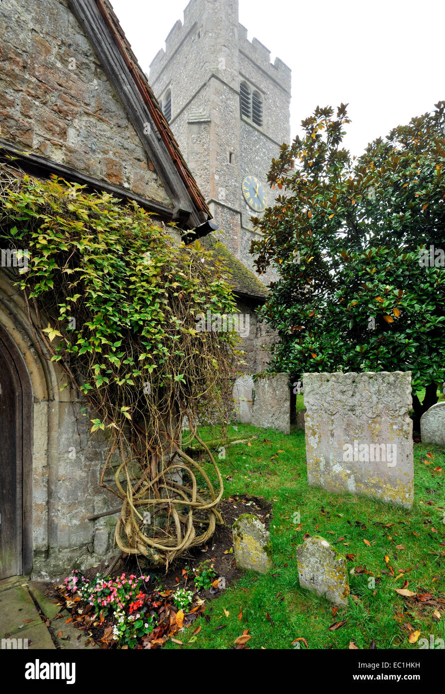 Dickens - graveyard at Shorne Parish church, near to Charles Dickens's Gad's Hill home, and in which the English - Stock Image