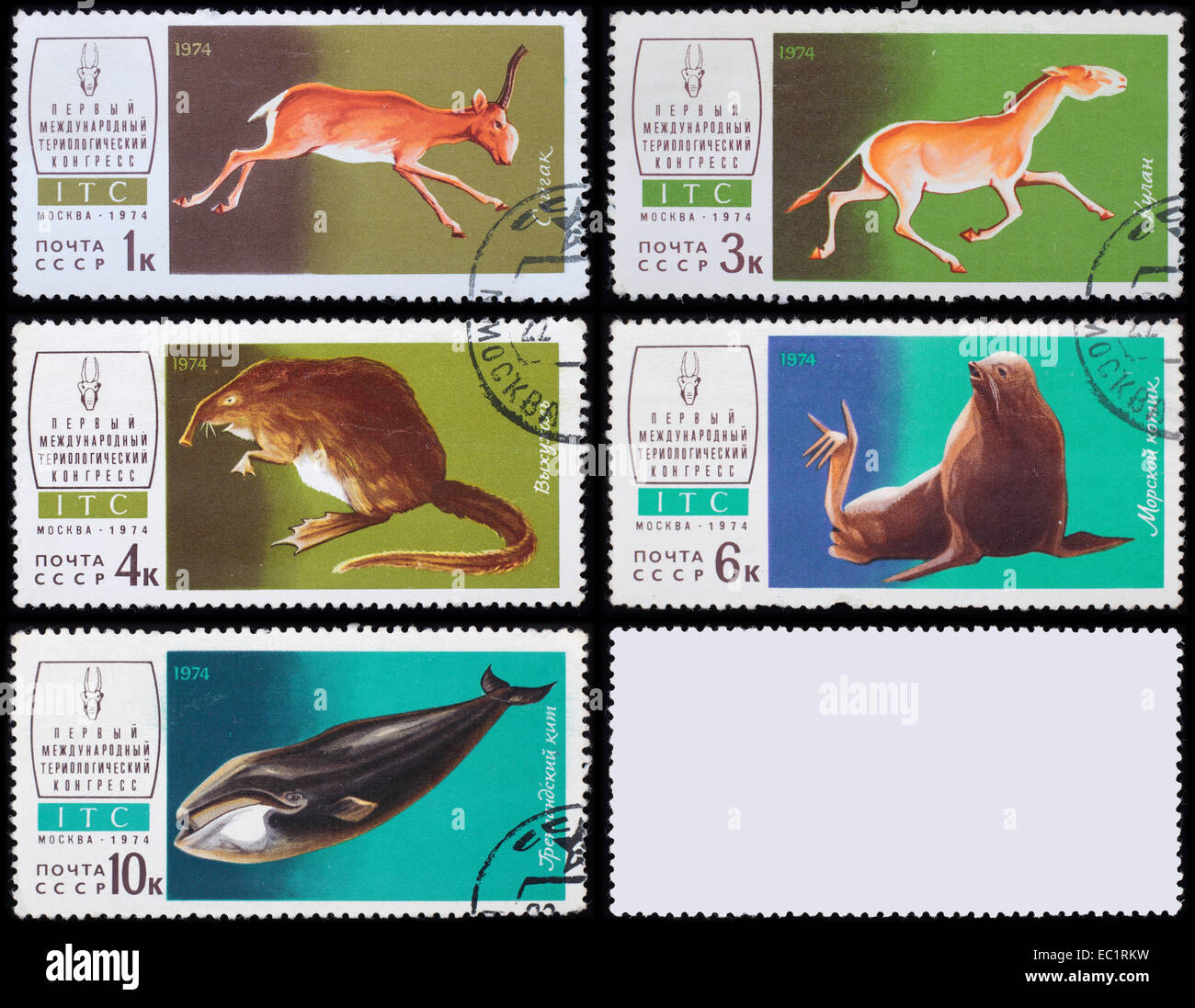 Soviet - circa 1974: A post stamp printed in the Soviet shows image of Animals, series Mammalogy International Congress, - Stock Image