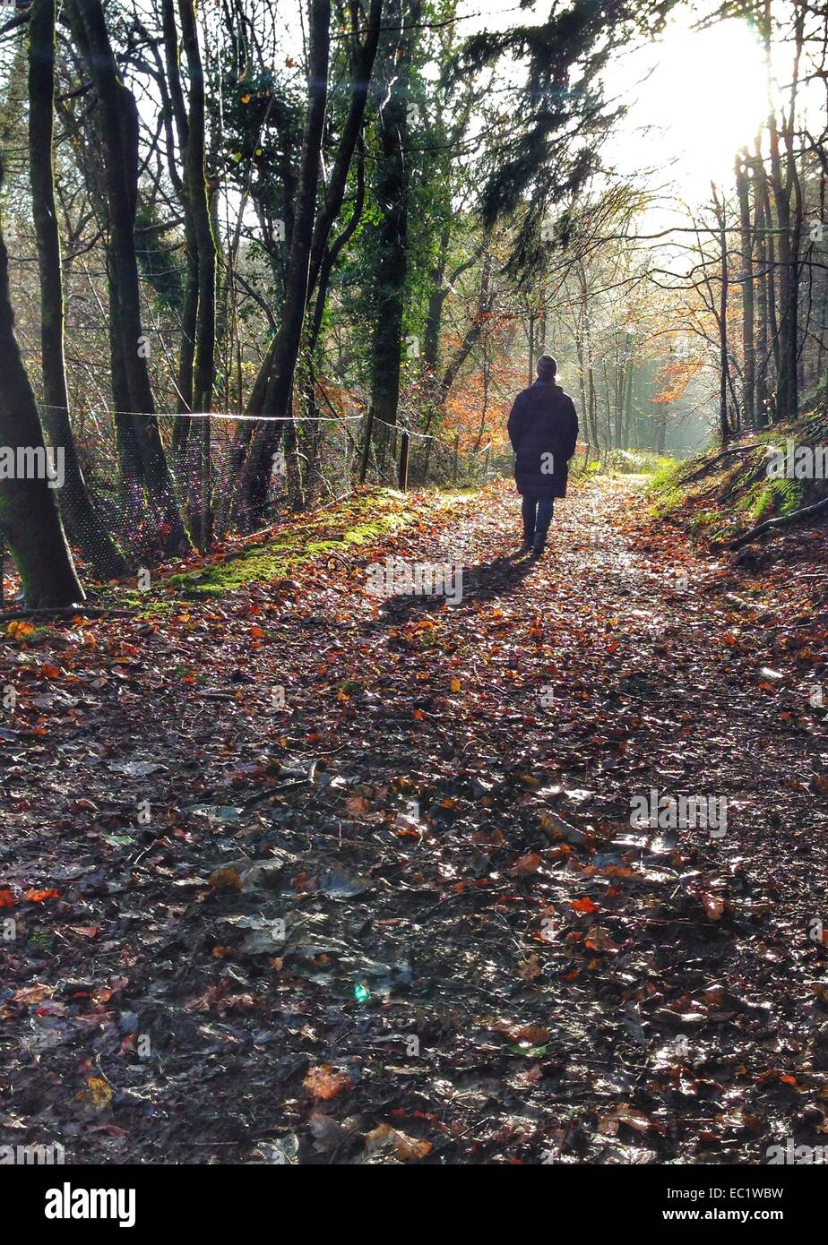 Dunsford, Devon, UK. 8th December, 2014. Morning sunshine and the last colours of Autumn in Fingle woods, Devon. - Stock Image