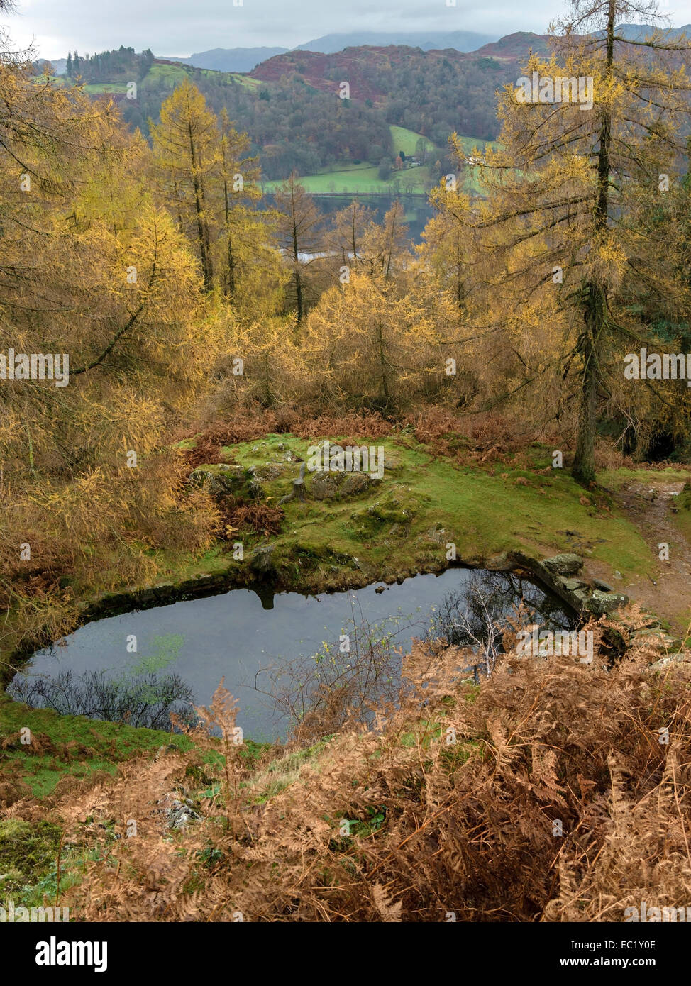 Autumn colour with small tarn and Grasmere beyond, Lake District, Cumbria, England, UK - Stock Image