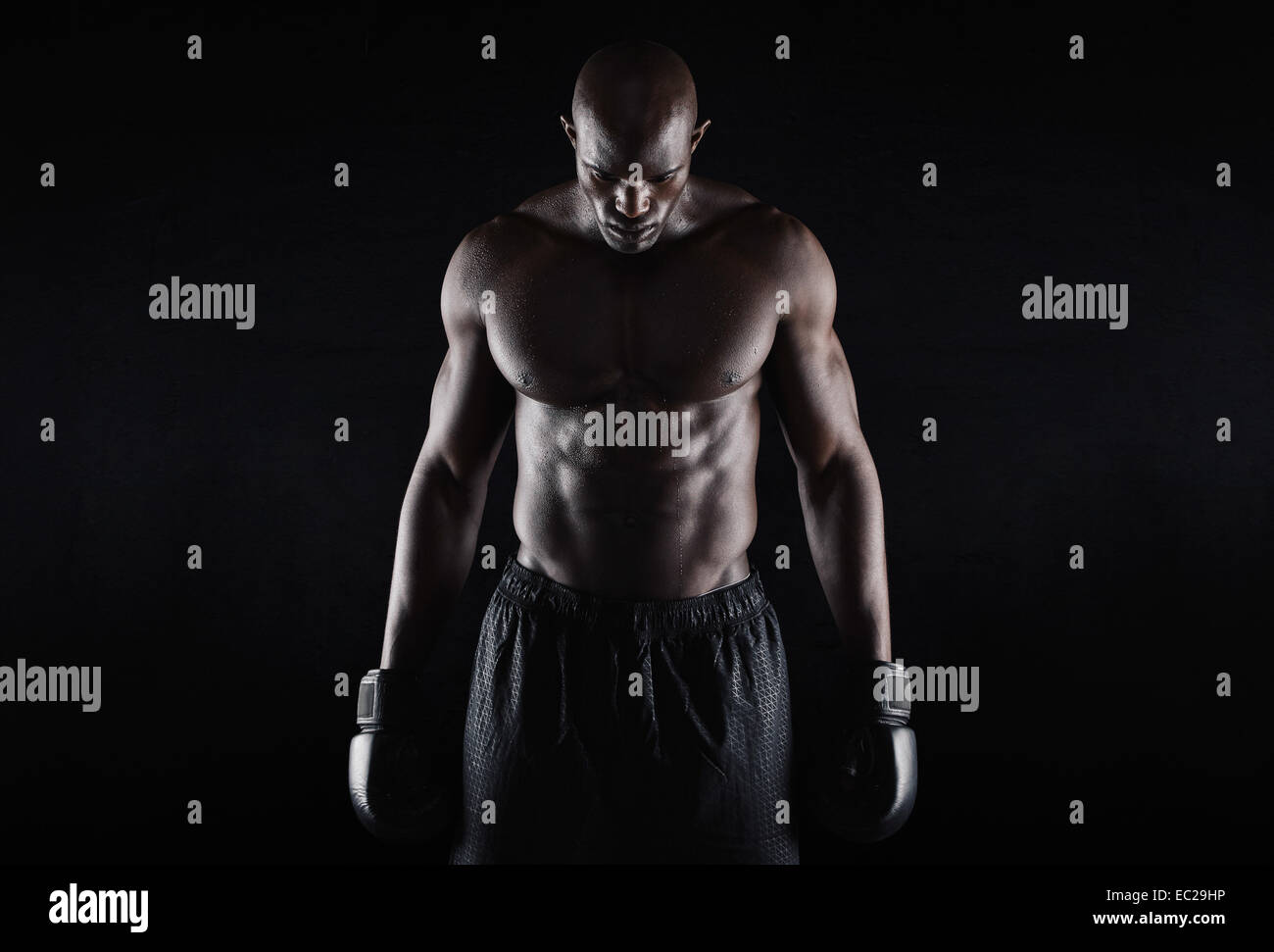 9f562739d18e Portrait of fit young man wearing boxing gloves looking down on black  background. Professional African