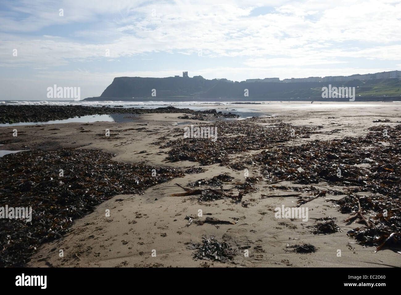 Low tide and a large expanse of sand and seaweed at North Bay at Scarborough on the north east coast of North Yorkshire - Stock Image