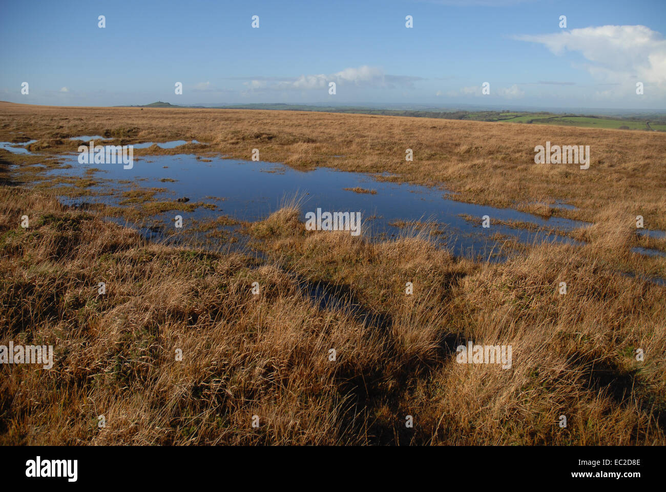 Autumn view of blanket bog with moss and grasses, Dartmoor National Park, Devon, England Stock Photo