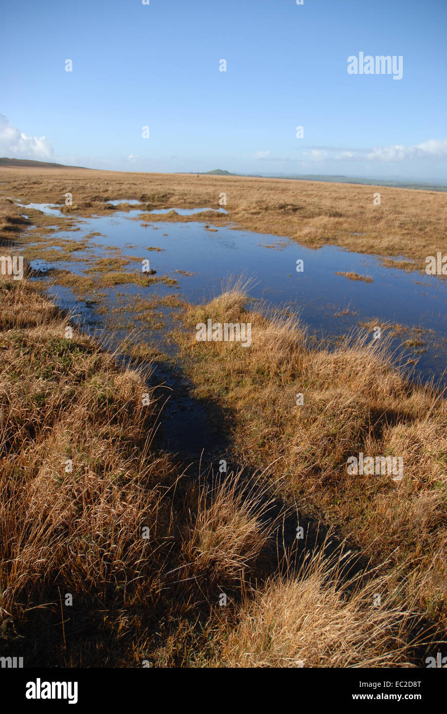 Blanket bog with grasses and mosses, Dartmoor National Park, Devon, England Stock Photo