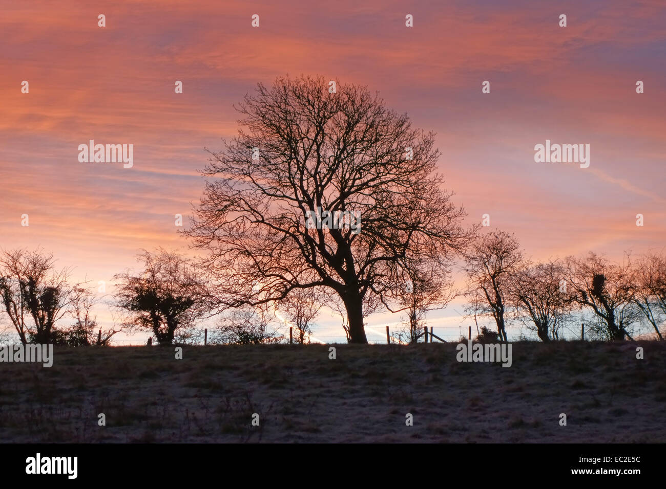 Winter sunrise on a frosty morning with bare hedegeline trees set against pinks, blues and purples of the dawn in - Stock Image