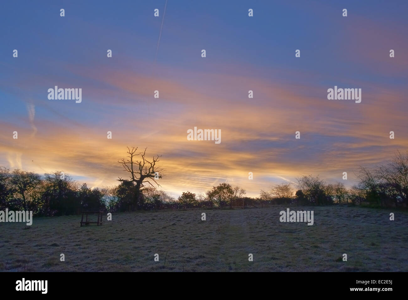 Winter sunrise on a frosty morning with bare hedegeline trees and a dead oak tree sinister silhouette set against - Stock Image
