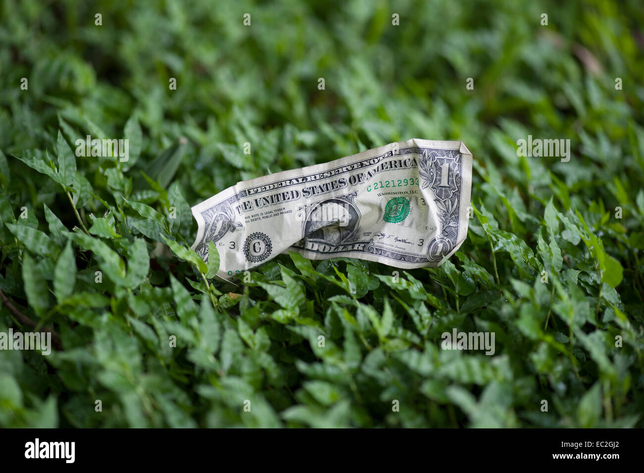 crumpled one dollar bill lying on grass - Stock Image