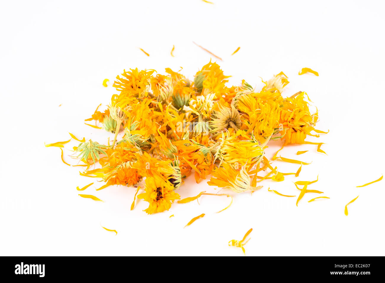 Calendula officinalis in white background - Stock Image
