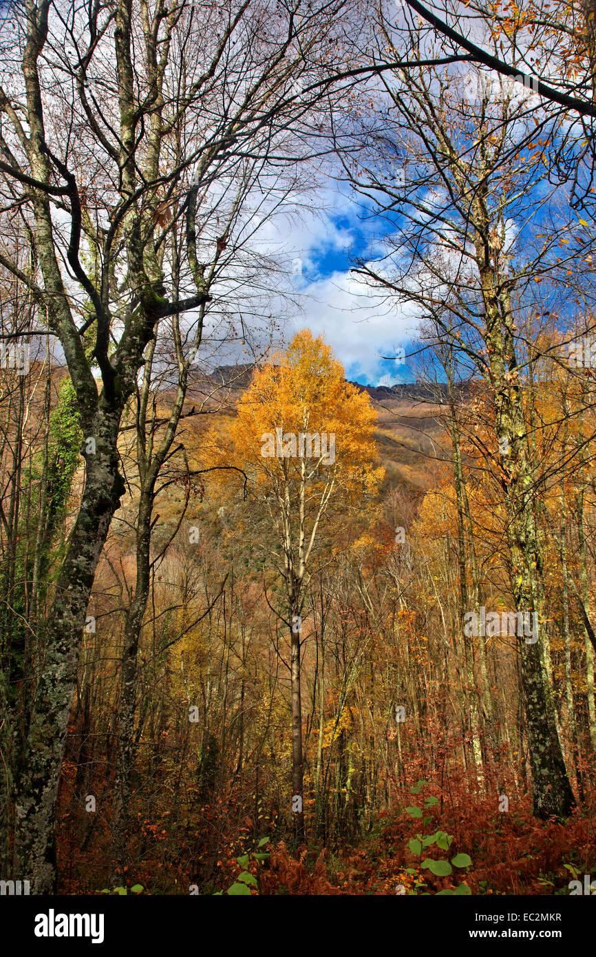 Last colors of autumn on the Pieria mountains, Pieria, Macedonia, Greece. - Stock Image