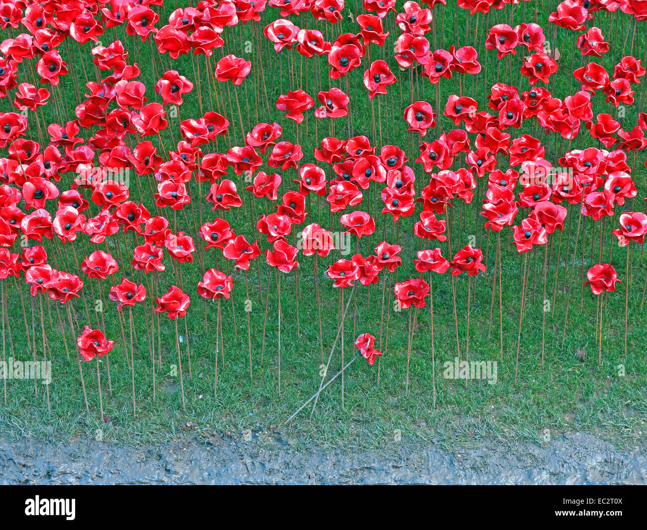 Detail of Blood Swept Lands and Seas of Red poppies, at The Tower of London, England UK Stock Photo