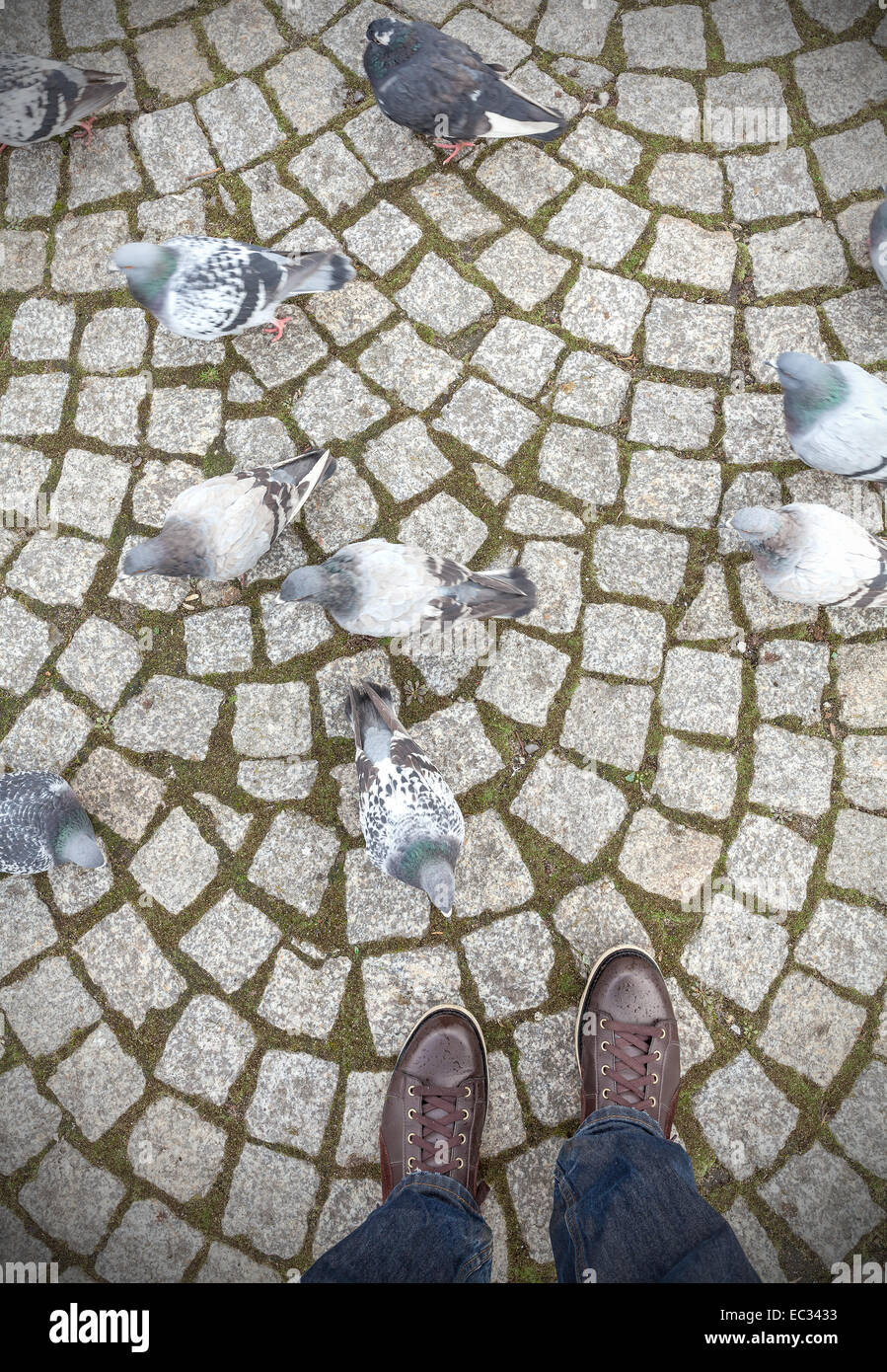 Concept picture of human feet and pigeons. Stock Photo