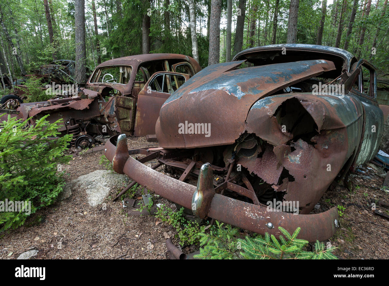 Junkyard in the forest, junk cars, 40s in Ryd, Småland, Sweden Stock ...