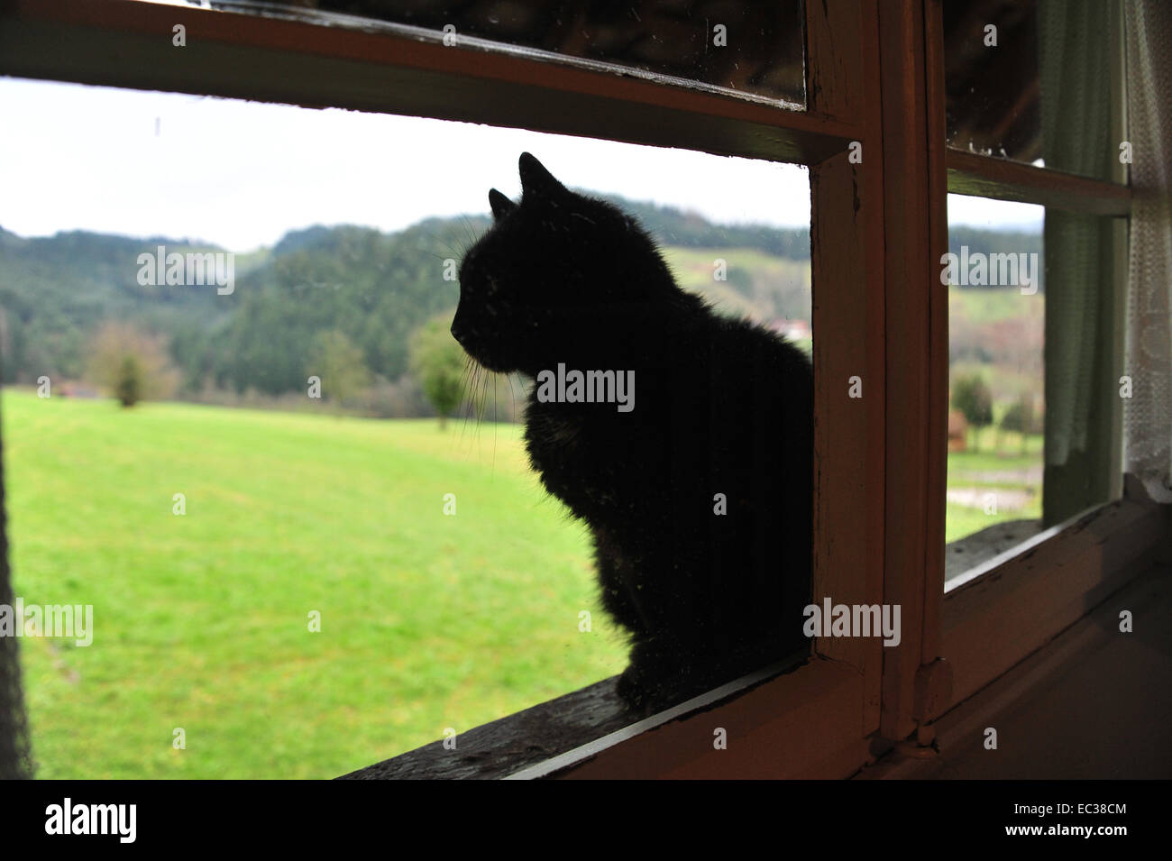 Black Cat Of Zell Stock Photos Black Cat Of Zell Stock Images Alamy