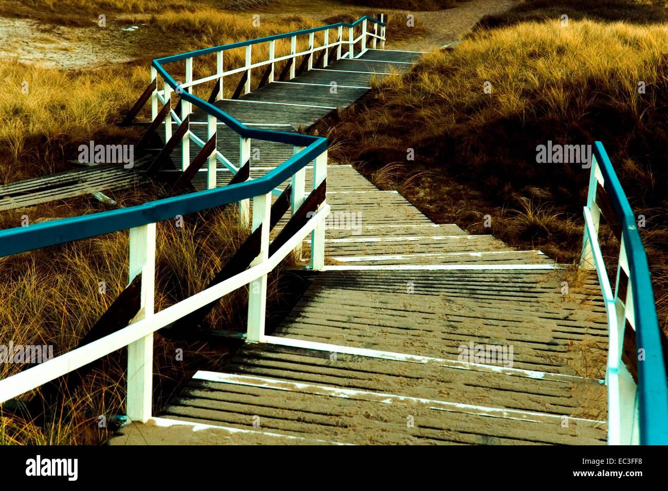 Dune web - Stock Image