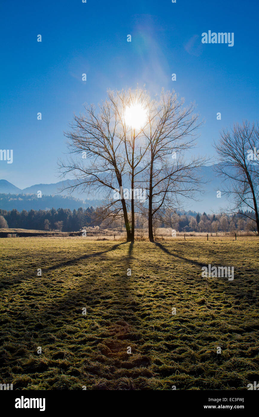 Sun shines through two trees Stock Photo