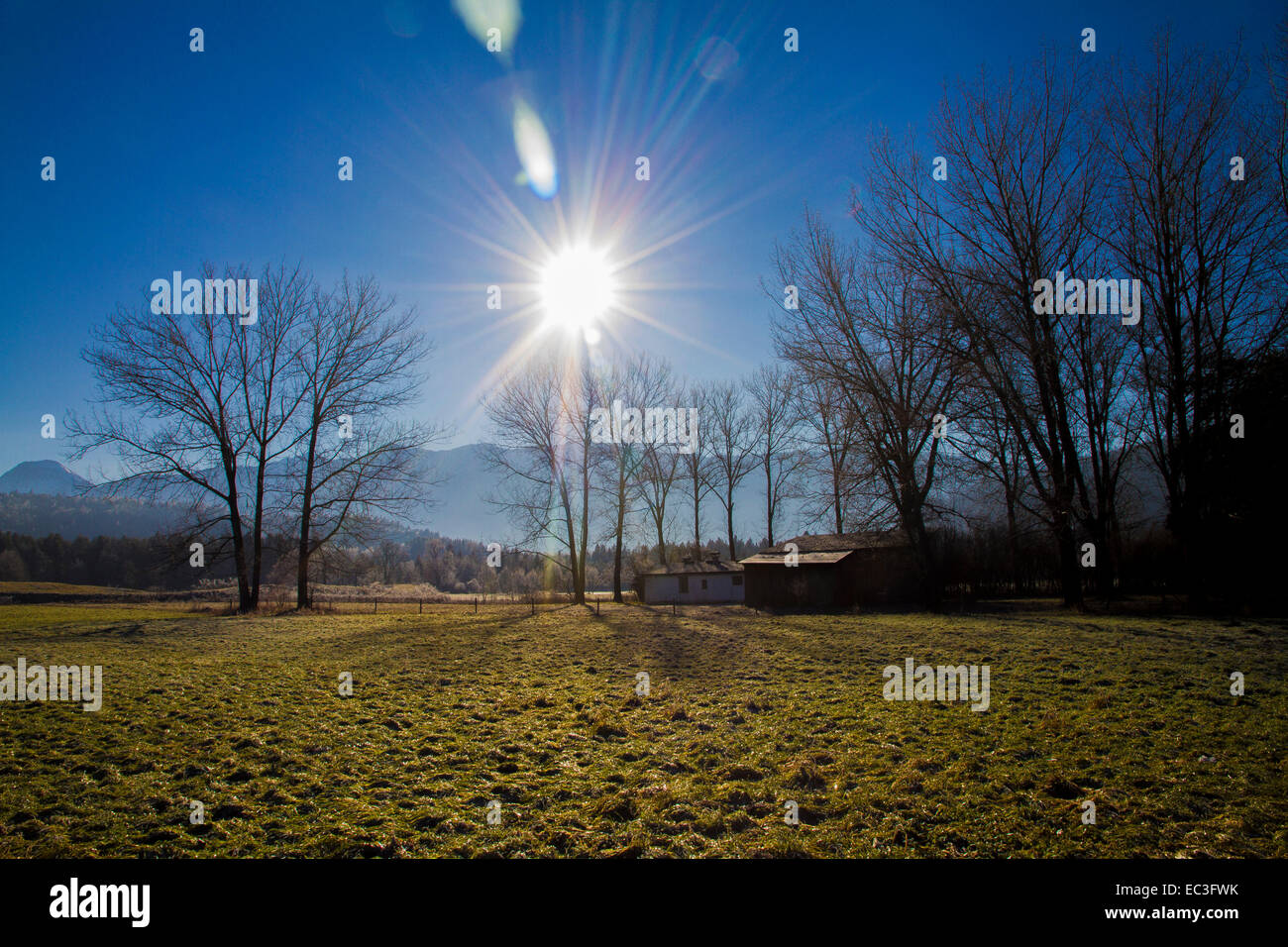 Sun shines through trees - Stock Image