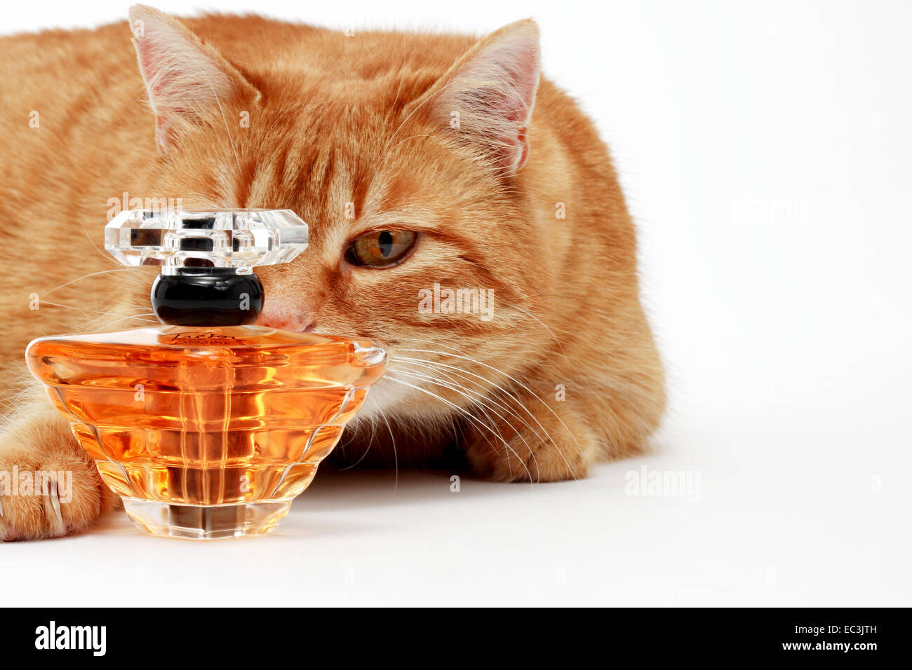 Cat with Flacon - Stock Image