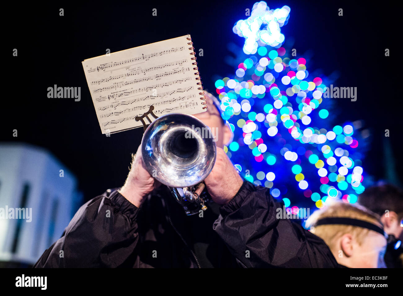 A man member of a brass band playing christmas carols on a brass trumpet instrument in front of a large Xmas tree, - Stock Image