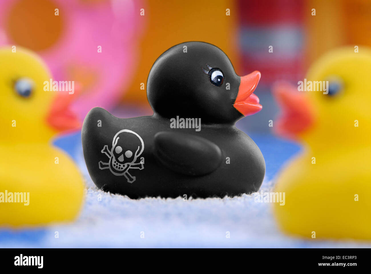 Black rubber duck labeled with skull, polycyclic aromatic hydrocarbons - Stock Image