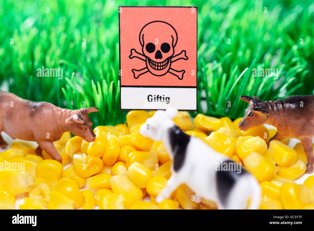 Corn and poison warning sign, contaminated animal feedstuffs - Stock Image
