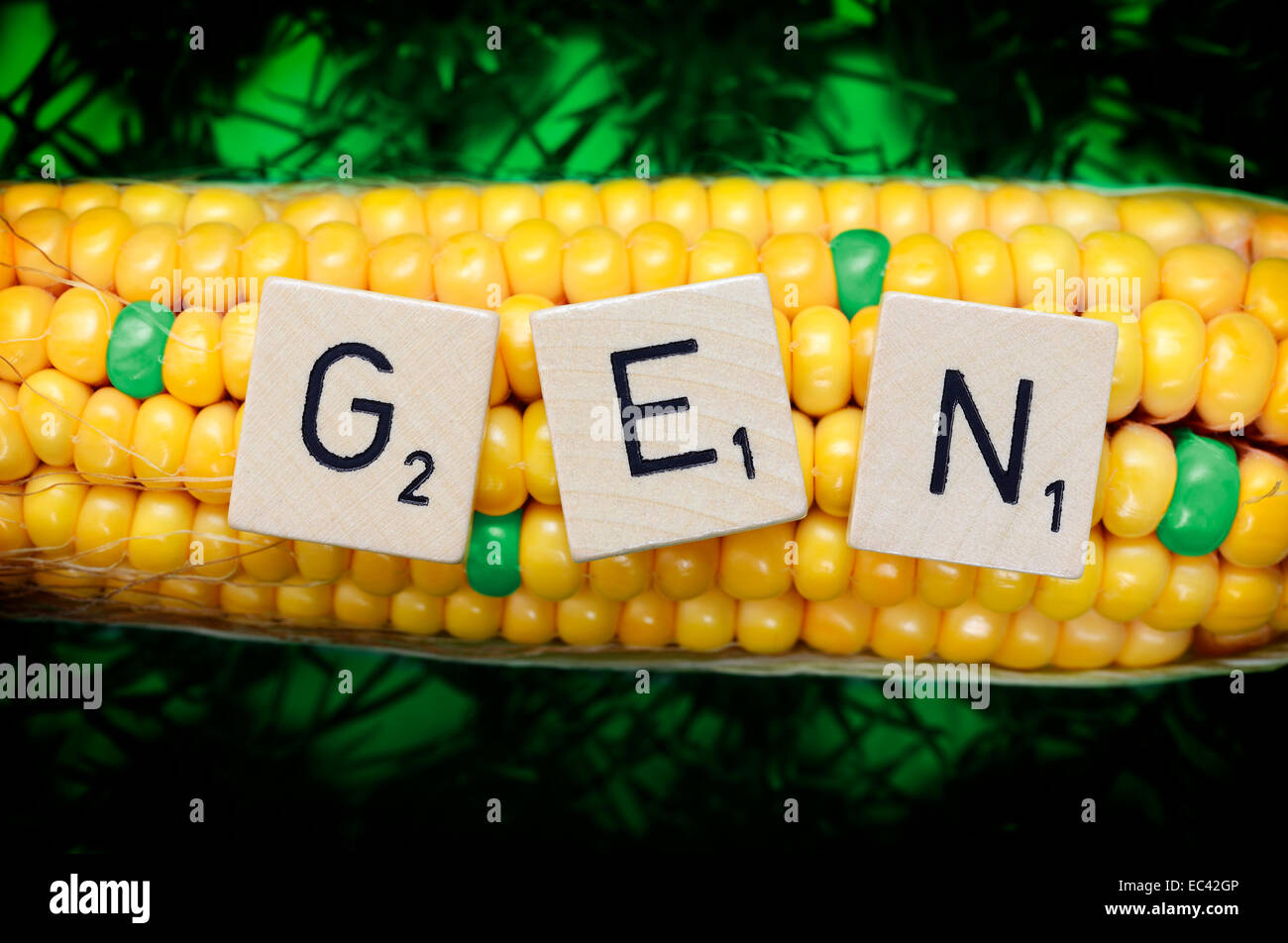 Corncob and letter cubes, genetically modified corn - Stock Image