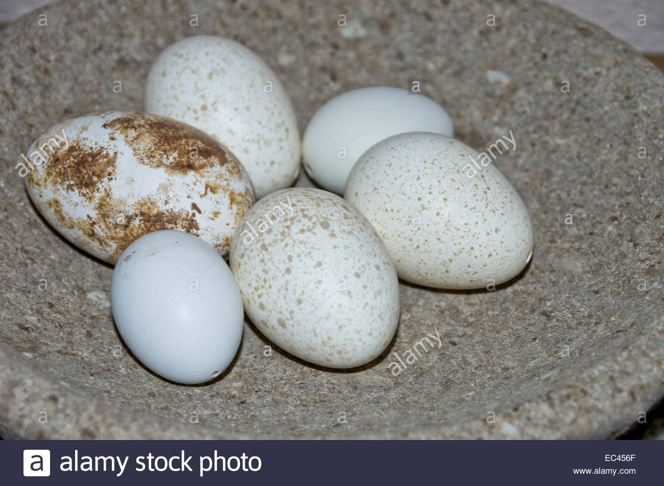 Freckled white Easter eggs or bird eggs in a bowl of stone - Stock Image