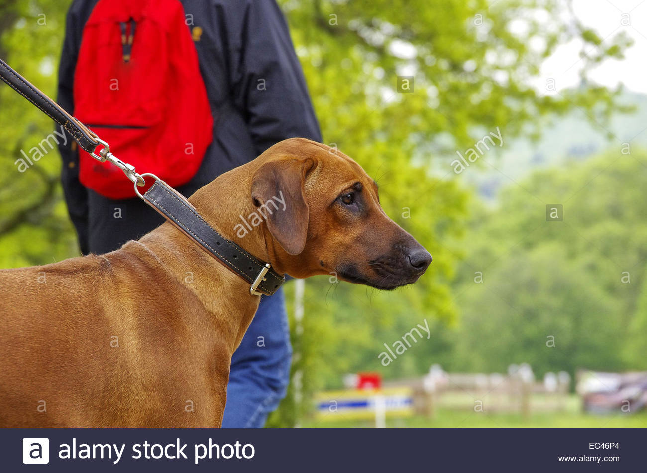 Dog on the line Stock Photo