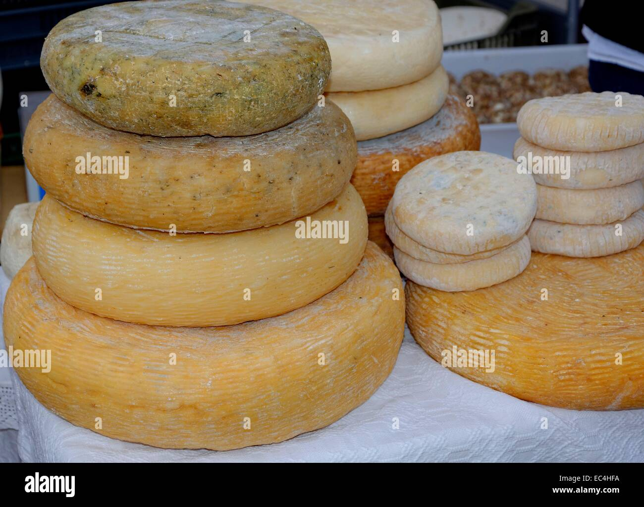 Hard cheeses in various stages of maturity - Stock Image