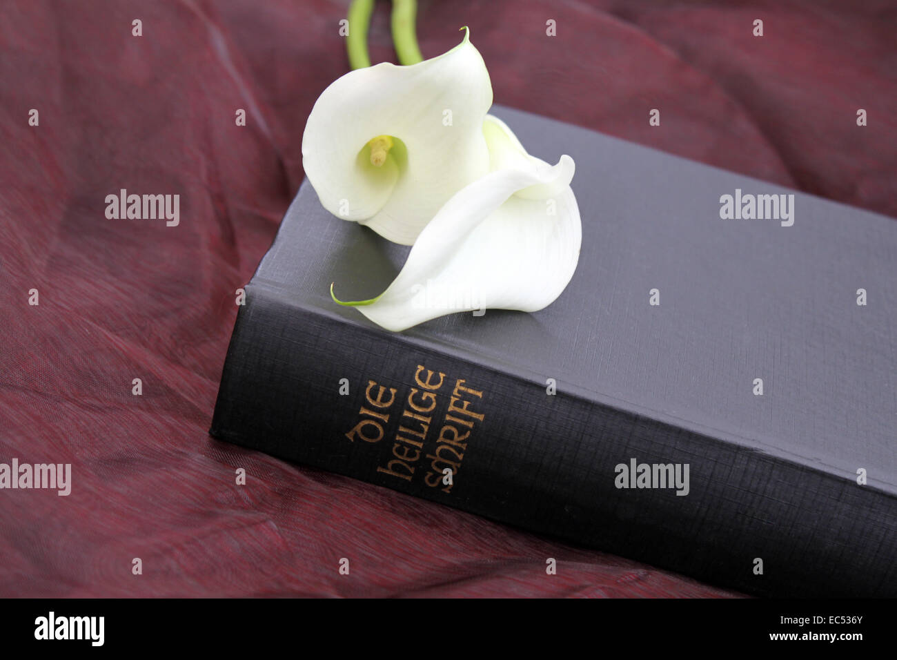 Calla flowers on the Scriptures - Stock Image