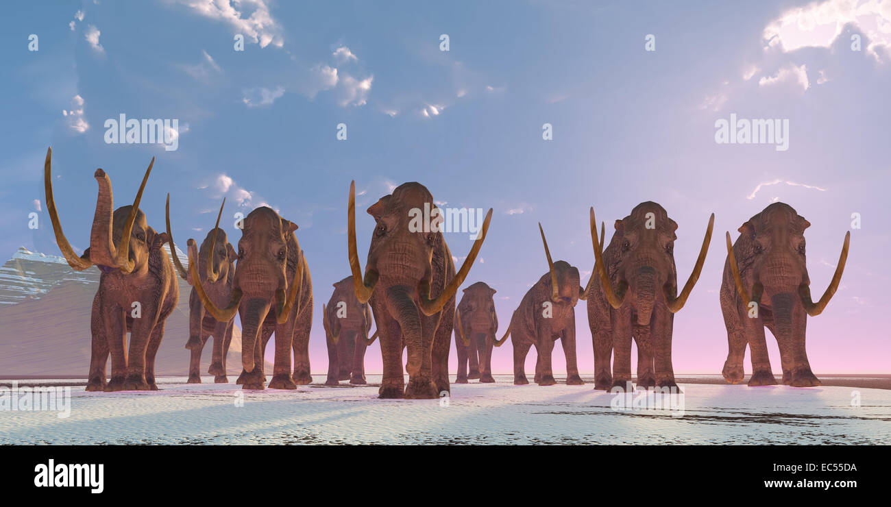 As winter sets in a herd of Columbian Mammoths migrate to a warmer climate. - Stock Image