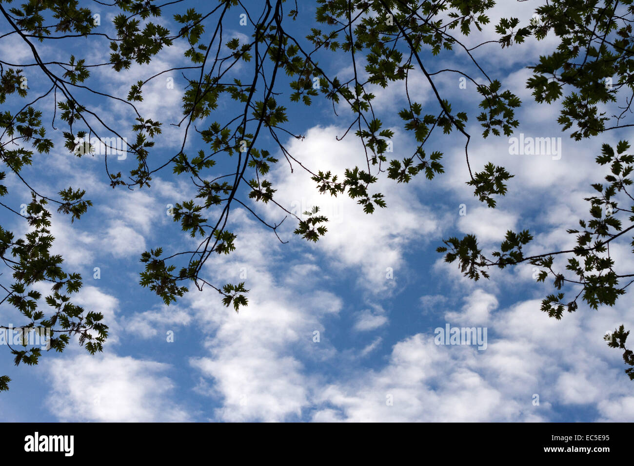 branches in front of a cloudy sky Stock Photo