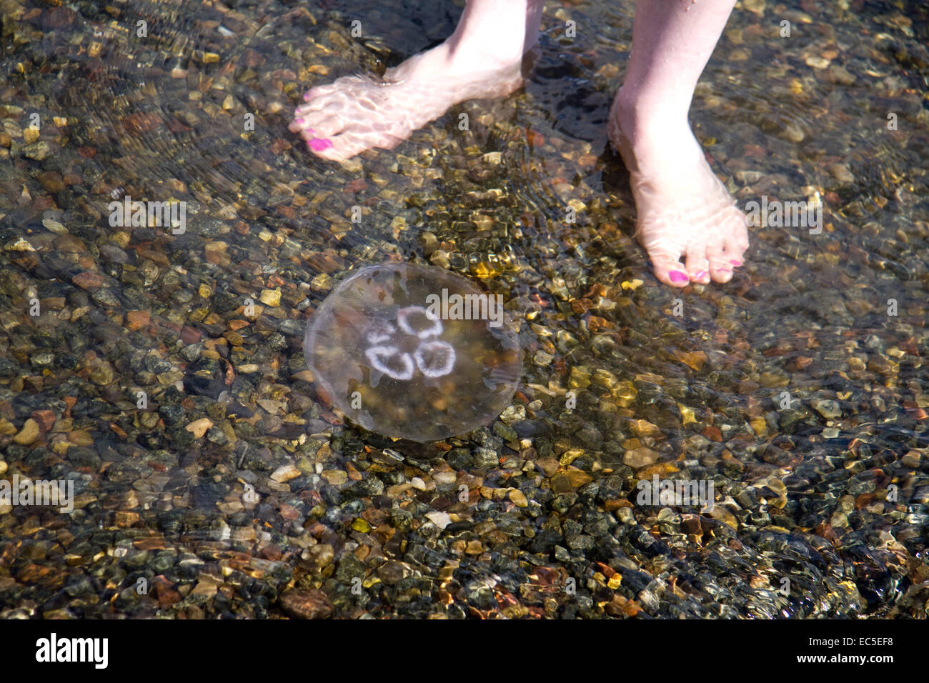 bare feet in front of jellyfish Stock Photo