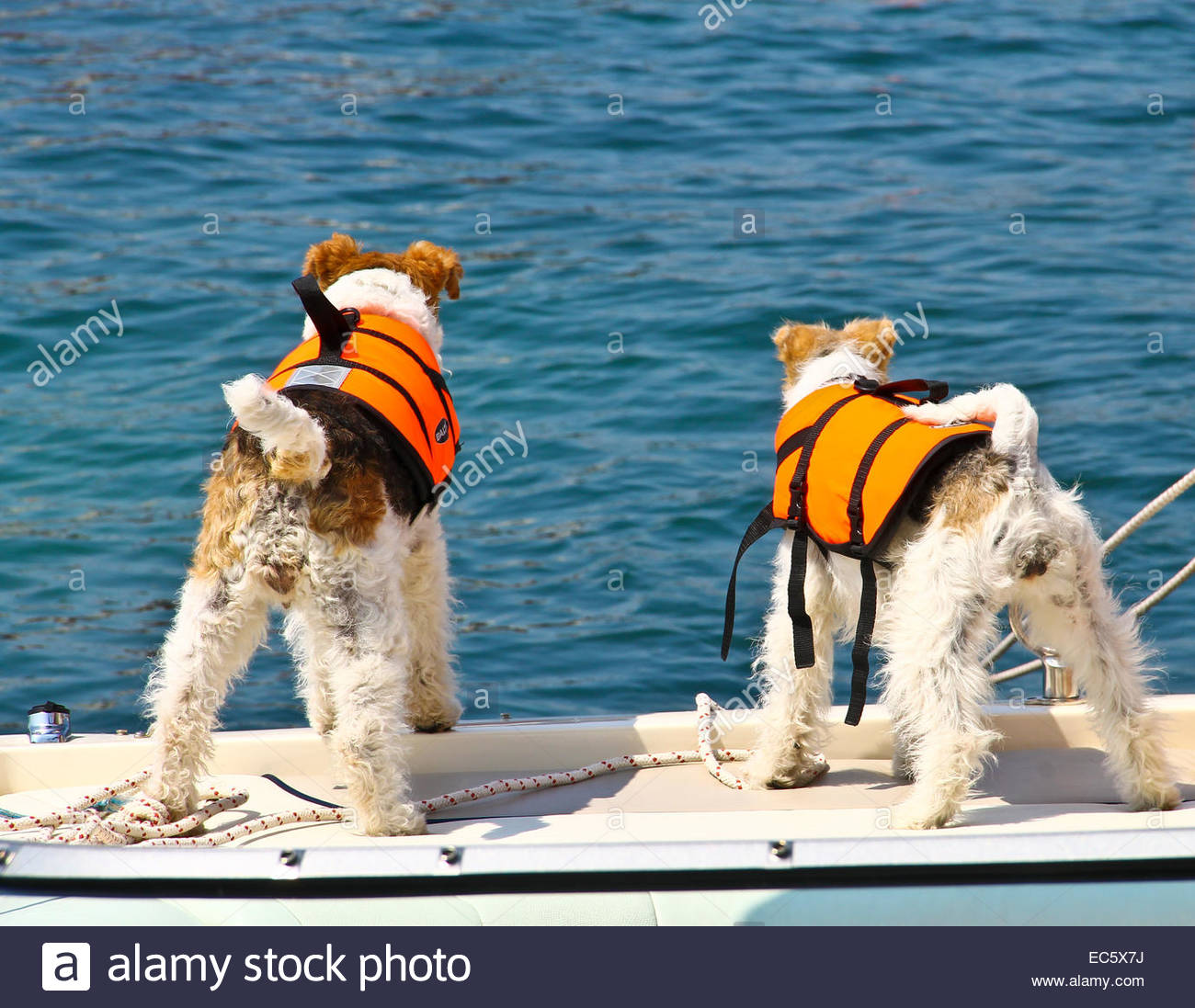 Dogs On Board Stock Photos & Dogs On Board Stock Images - Alamy